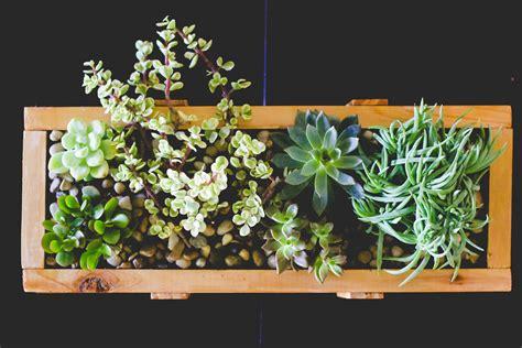 wooden succulent planter succulent planter diy for 10 em reap