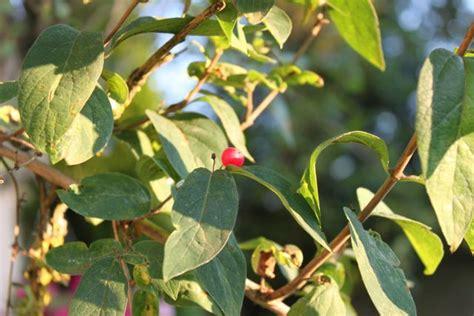 Baum Mit Roten Blättern 136 by Baumbestimmung