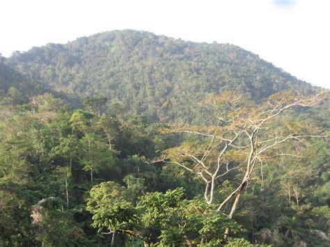 Reforest Habitats for 60 Gorillas in Cameroon - GlobalGiving