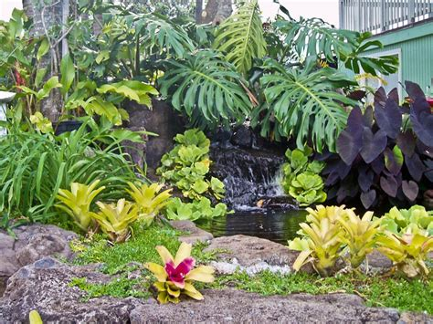 tropical backyard design ideas tropical garden landscaping ideas
