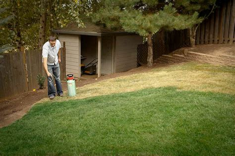 spray painting grass green lawn paint keeps grass green lawn spraying lawn
