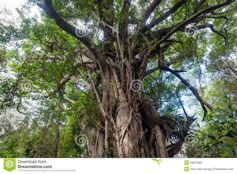 tropical tree tropical forest tree detail royalty free stock photo
