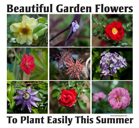 garden flower types 10 types of beautiful flowers to plant in your garden for