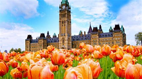 festival canada celebrating the canadian tulip festival with some facts