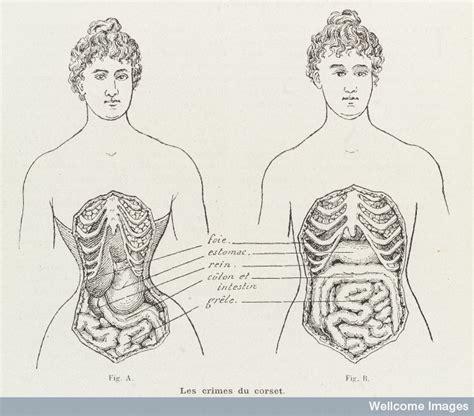 waist history year 8 history corset images mrs smolder s