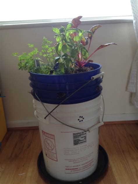 5 gallon planter food is free project