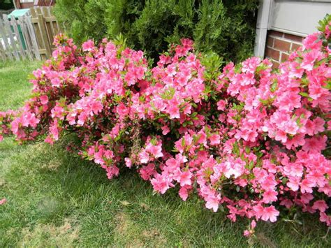 small plants that don t need sun gardening landscaping shrubs for sun decoration