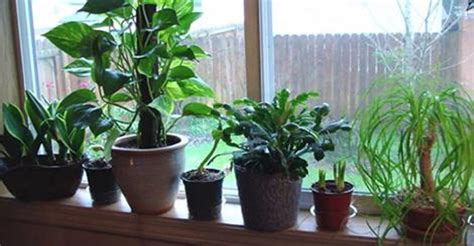 best plants indoors 10 best plants to grow indoors for air purification