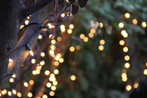 string lights tree free stock photo of bokeh of string lights on tree
