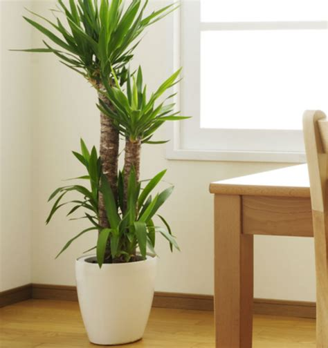 small plants that don t need sun indoor plants that don t need much sun myideasbedroom