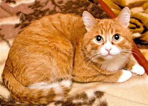 orange cat cats susmilch