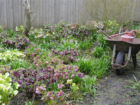 flowers shade garden 10 best perennials for shade diy