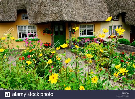 traditional cottage garden flowers picturesque traditional thatched cottage with garden