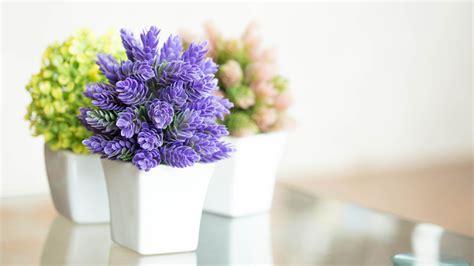 low light indoor flowers pretty indoor flowering plants today