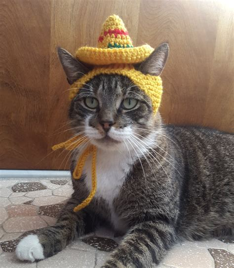hat for sombrero cat hat knit hat for cat