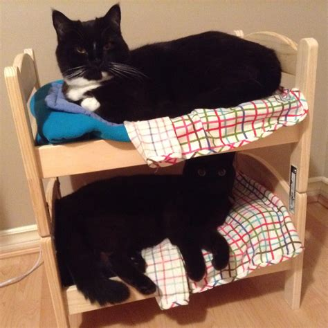 how to make a cat bunk bed for your kitties