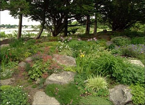 rock garden plants for shade rock garden plants for shade 100 1666 landscape design