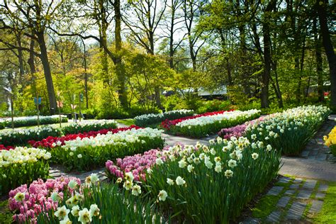 tulip time the netherlands expat explore travel