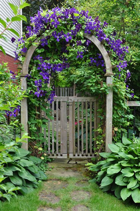 Garden Arch Vines Flowers Growing On A Garden Arbor Windowbox