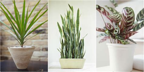indoor plants no light low light houseplants plants that don t require much light