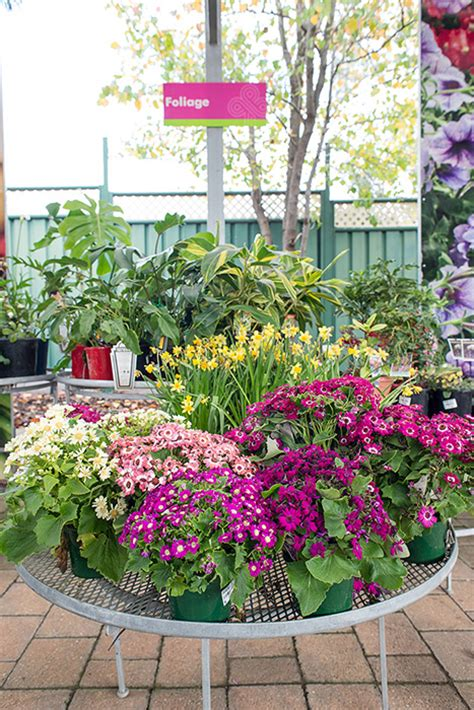 garden grove flowers garden grove flowers garden grove flower delivery