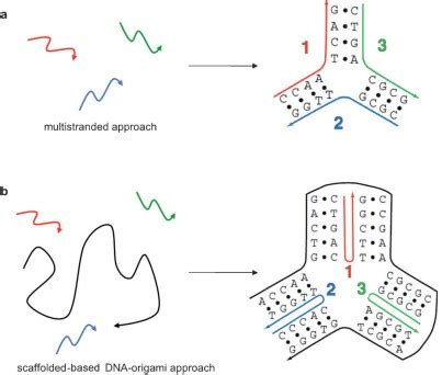 dna origami software file dna origami figure3 jpg self assembly wiki