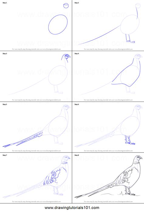 how to drow how to draw a common pheasant printable step by step