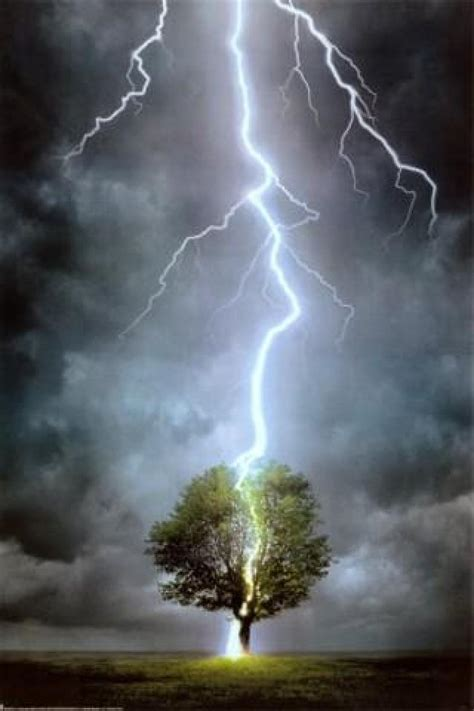 lighting trees lightning strikes tree images