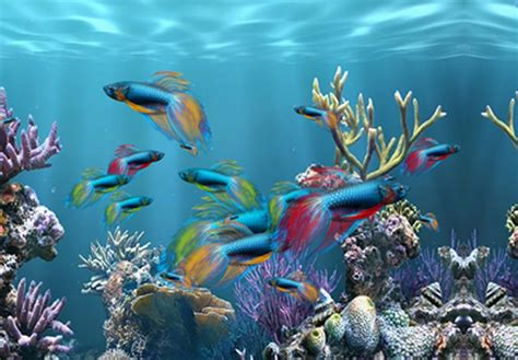 desktop background fond d 233 cran anim 233 gratuit aquarium