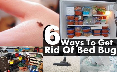 Get Rid Of Bed Bugs Fast by Need To Get Rid Of Bed Bugs Fast Get Rid Of Fruit Flies