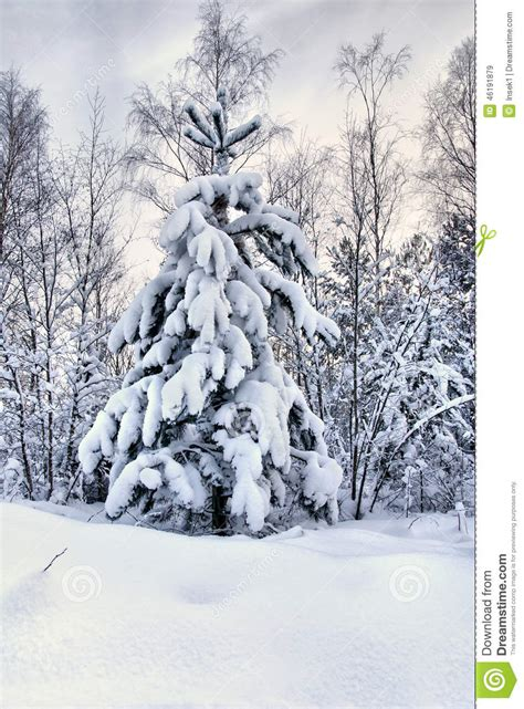 snowy tree pictures snowy tree stock photo image 46191879