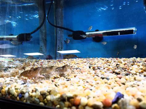nature aquarium 80 photos 85 reviews local fish stores 2836 santa blvd santa