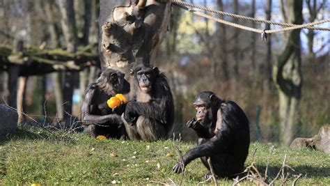 Zoologischer Garten Rabatt by Zoo Magdeburg Gutschein F 252 R 50 G 252 Nstigeren Eintritt