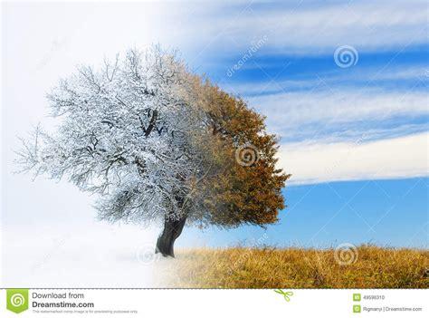 chagne trees seasons change stock illustration image of landscape