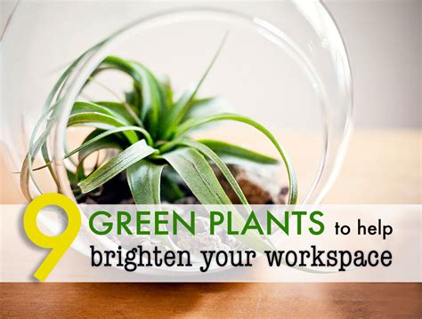 plants for the office 9 low maintenance plants for the office 9 low maintenance
