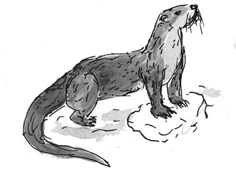 Otter Illustration   Denton Community Market