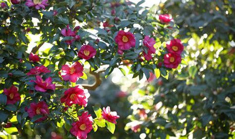 winter flower garden winter garden bring an sparkle with a variety of