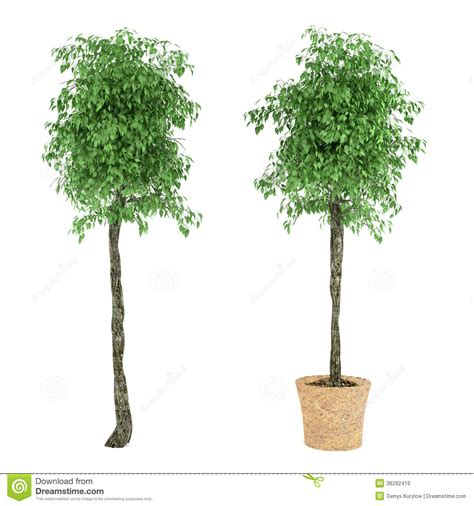pot tree plant tree in the pot stock illustration image