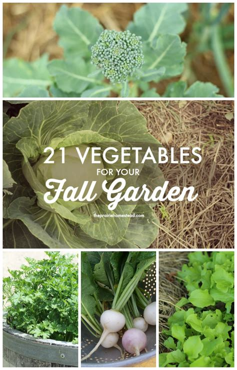 21 vegetables you need to plant for your fall winter