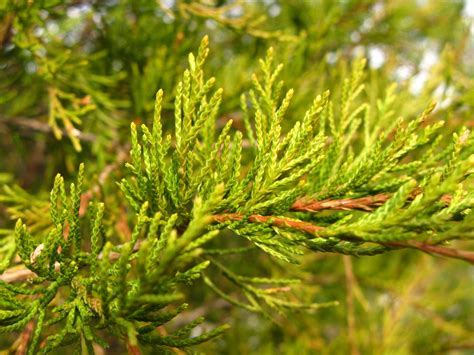 popular types of trees tree varieties