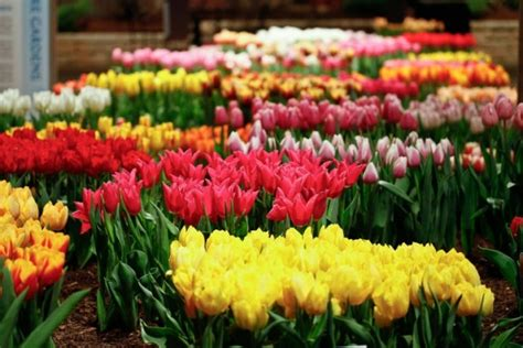 flower and garden show chicago chicago flower and garden show 2015 nowyouknow