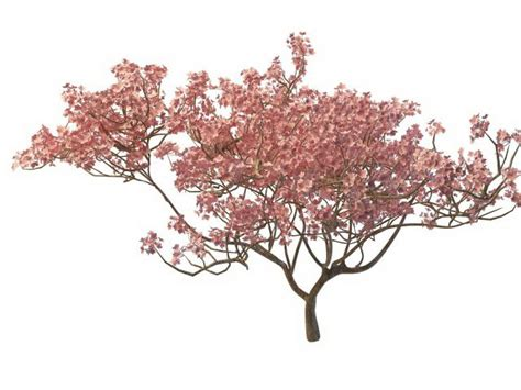 cherry blossom tree 3d model free blooming tree 3d model 3ds max files free modeling 30065 on cadnav