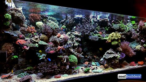 the masterpiece aquarium of david saxby coral featured reefs morning coffee news reef