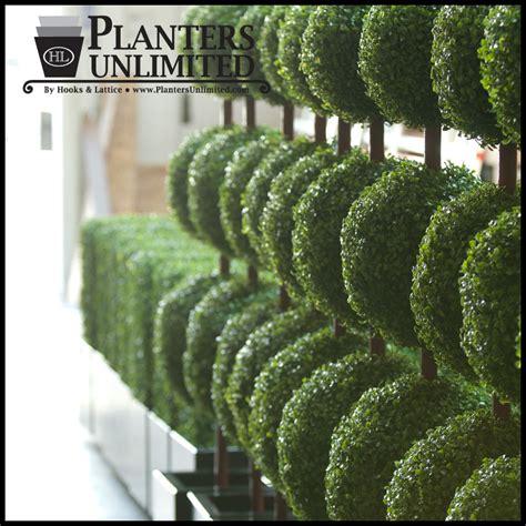 outdoor topiaries outdoor artificial topiaries topiaries topiary plants