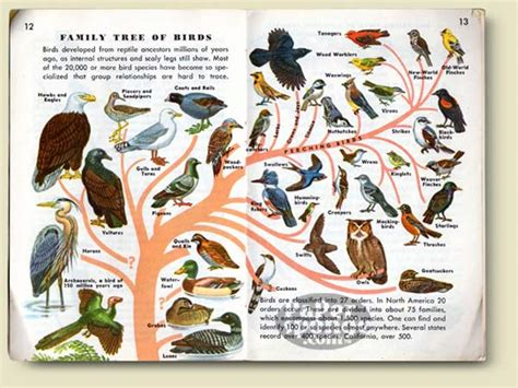 bird picture books papersponge vintage ephemera postcard paper book
