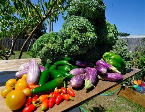 garden vegetable 6 steps to your delicious vegetable garden