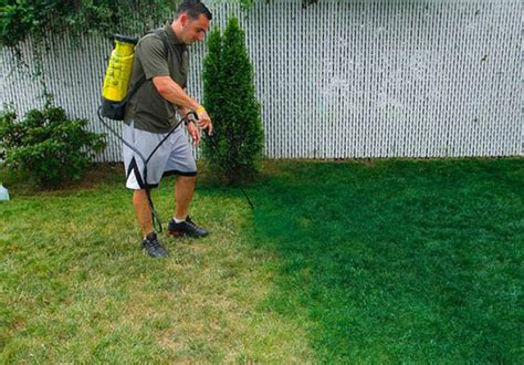 Lawns Try A Spray Paint Makeover Ny Daily News