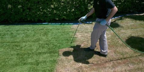 spray painting your lawn painting lawn green drought lawn care