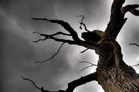 tree horror historical horror the carpathian interlude series