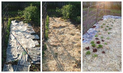 straw mulch vegetable garden mulching the vegetable garden frugal upstate